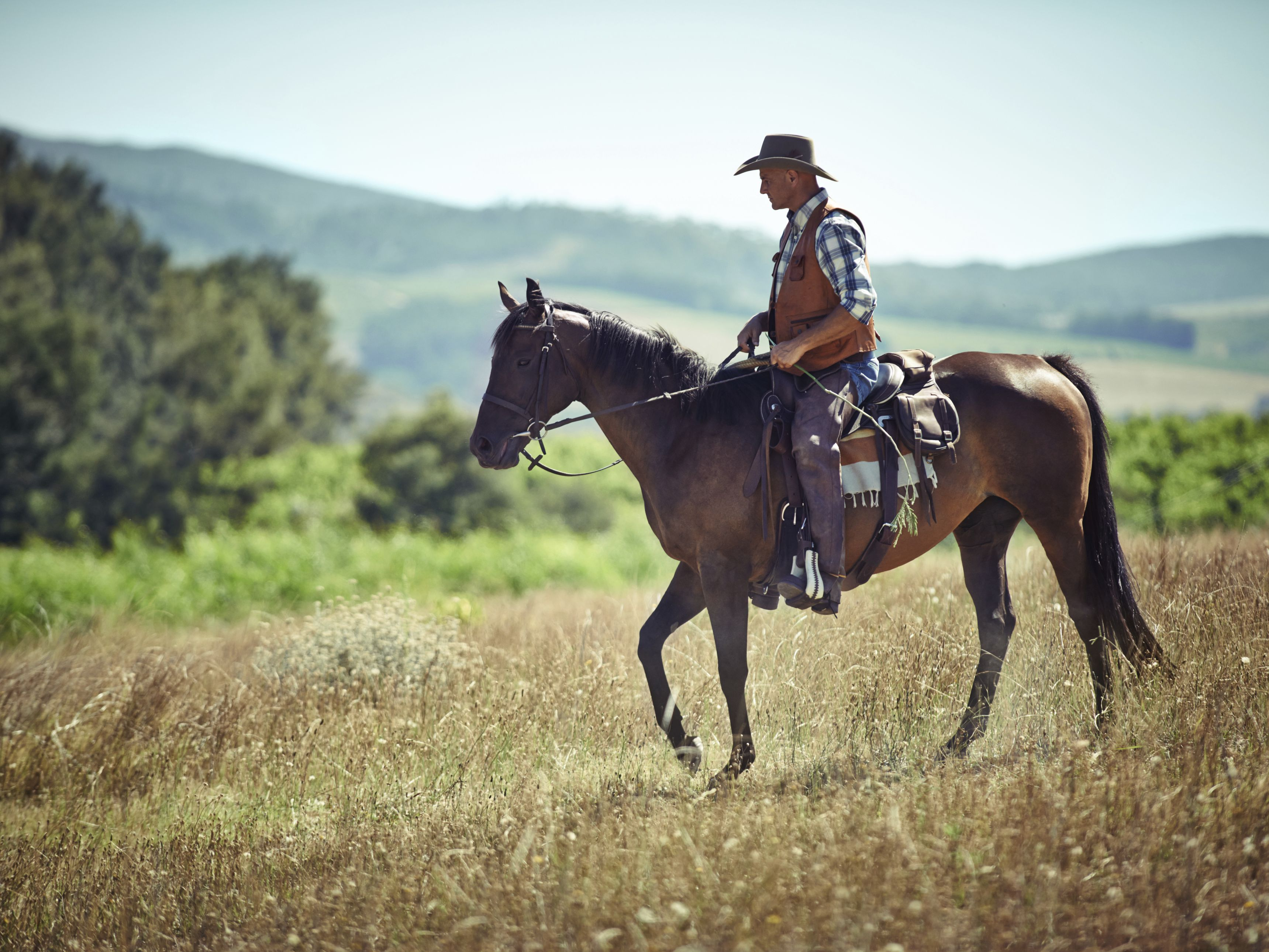What Is The Difference Between Western And English Riding Styles
