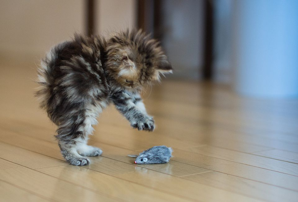 gatito jugando con juguete