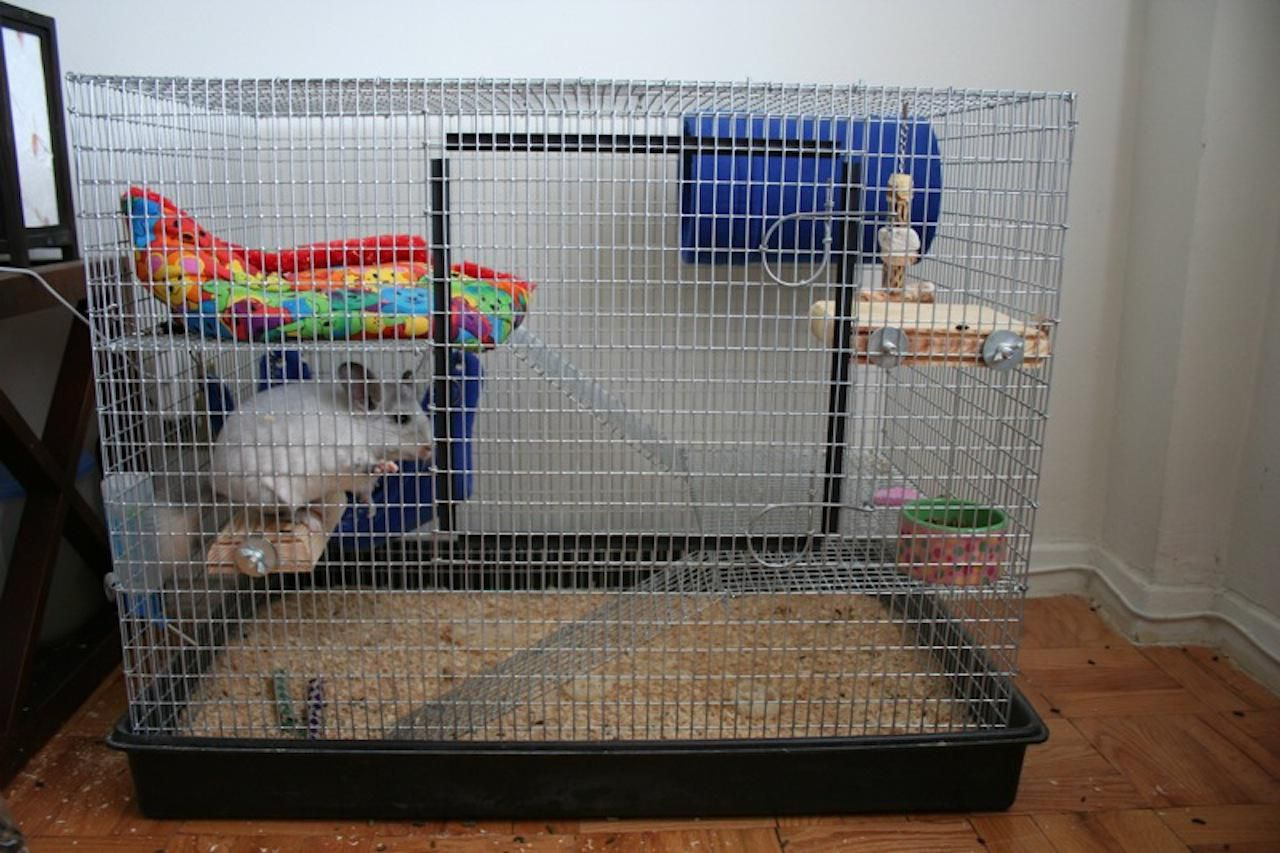 chinchillas as pets cages for pet chinchillas. Black Bedroom Furniture Sets. Home Design Ideas