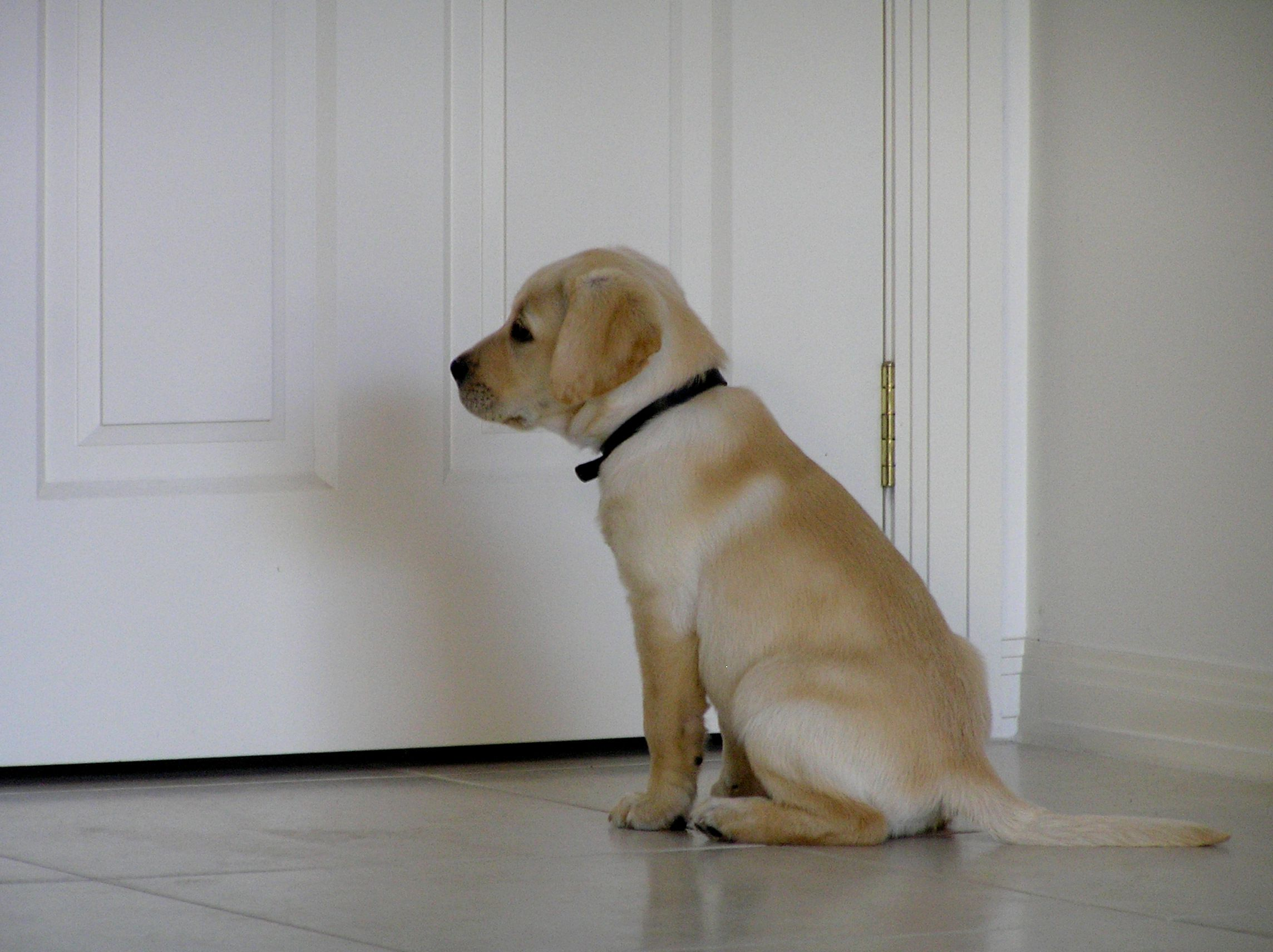 Teach your pup to stay calm when a door opens