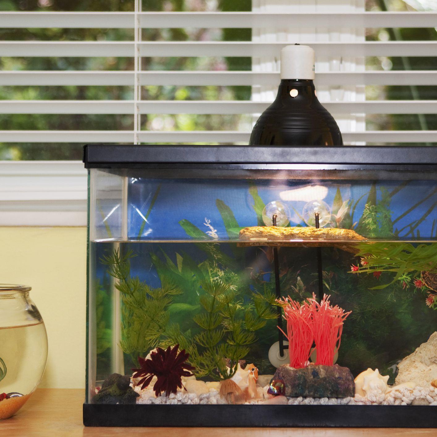 Freshwater To R Aquarium