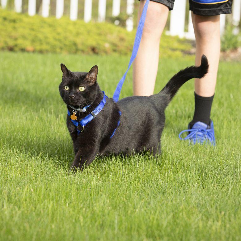 Black Cat on Leash