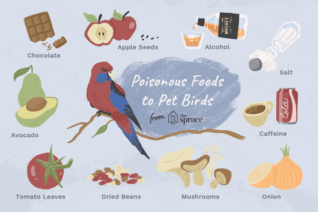 10 Foods That Are Poisonous to Birds