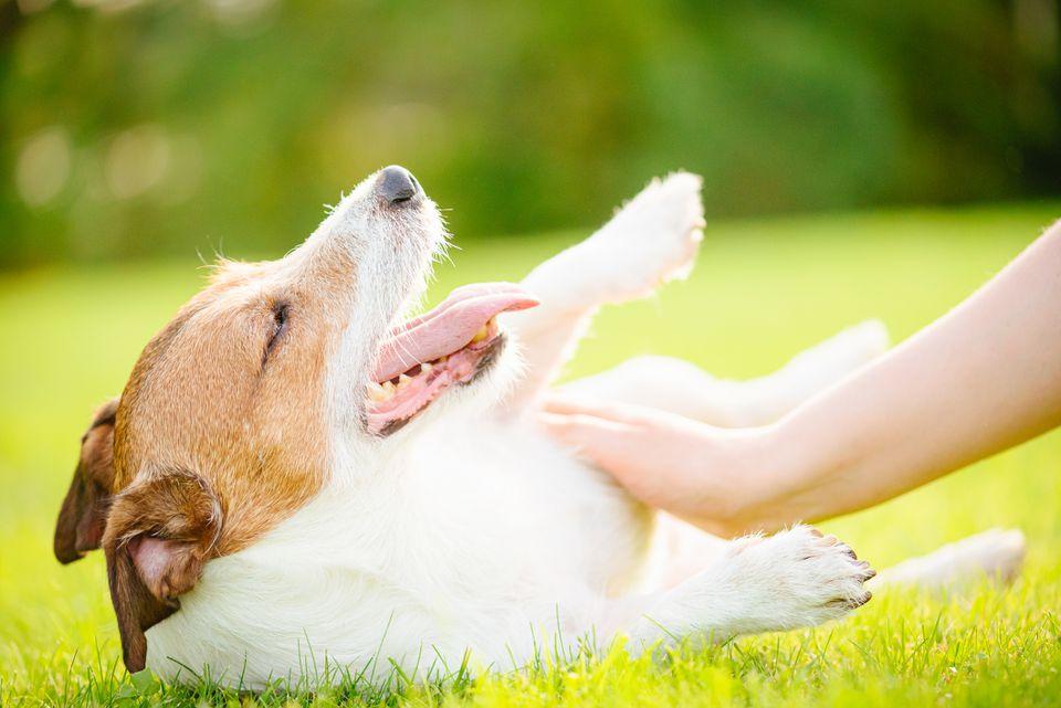 submissive behaviors in dogs
