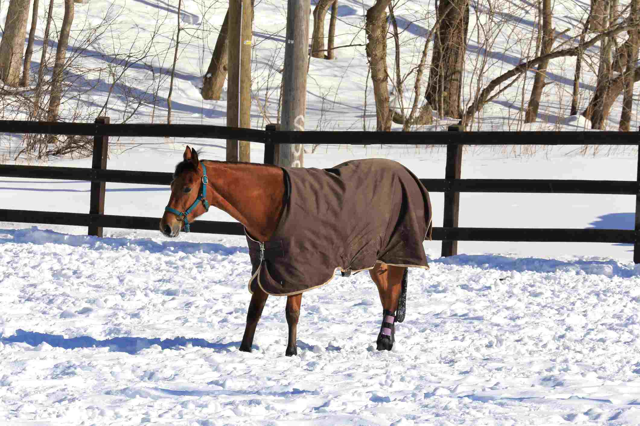Horse wearing cover