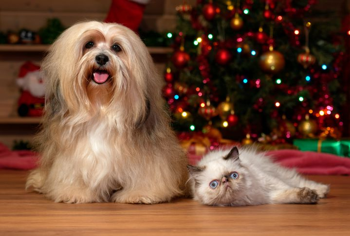 Dog and cat in front of Christmas tree