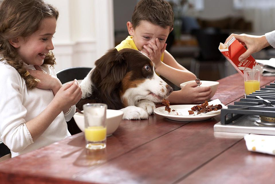 Dog eating scraps from plate between children (6-8) at kitchen table
