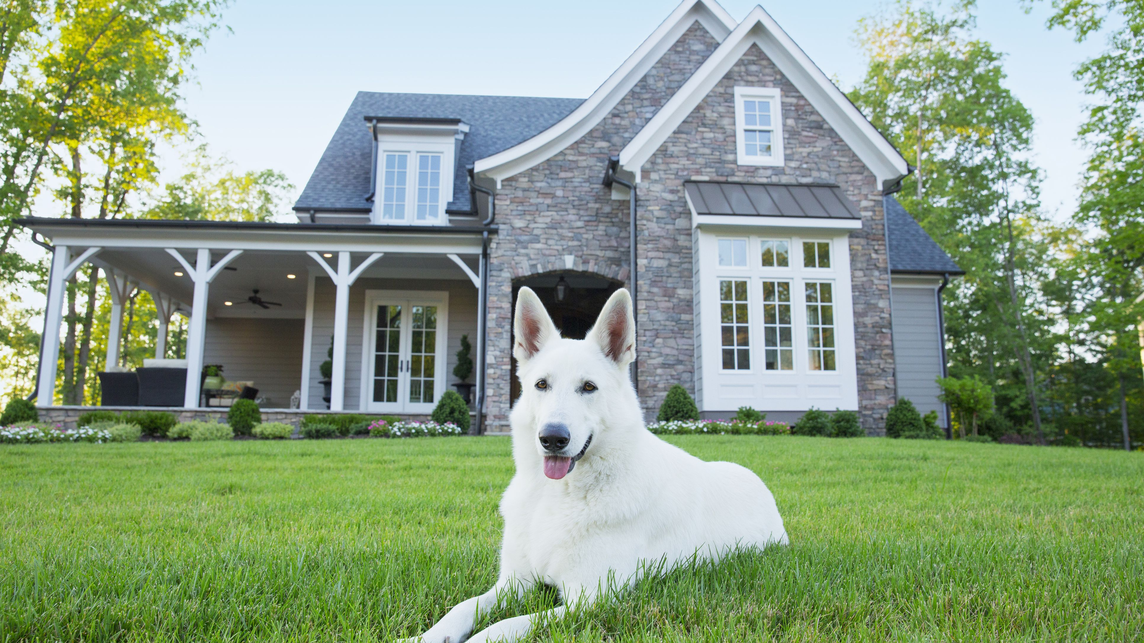 https://www.thesprucepets.com/thmb/wM6ooTWSJcmgBWR4awId1BKncwE=/3865x2174/smart/filters:no_upscale()/dog-laying-in-front-of-suburban-house-519517073-5921f9733df78cf5fa9b382f.jpg