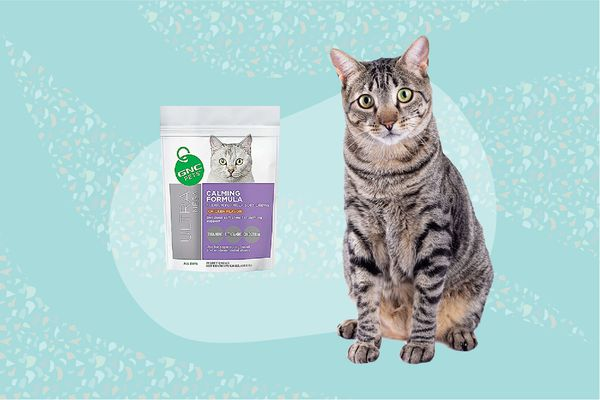 Best Calming Aids for Cats