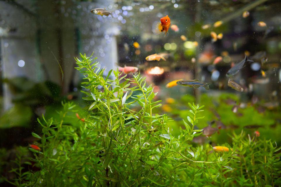 mini aquatic plants landscape for sale