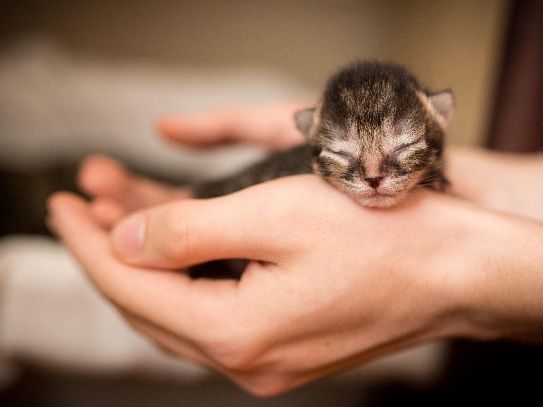Raising Newborn Kittens