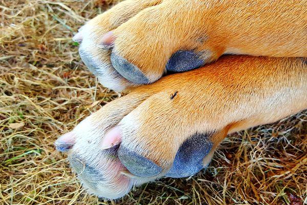 ant bites in dogs