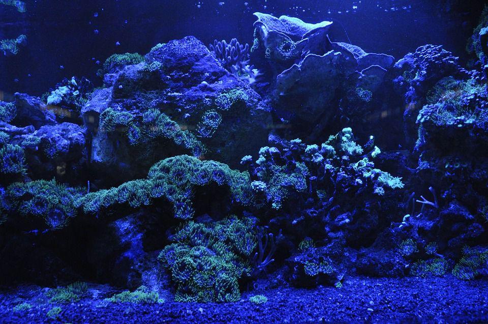 acuario con iluminación LED