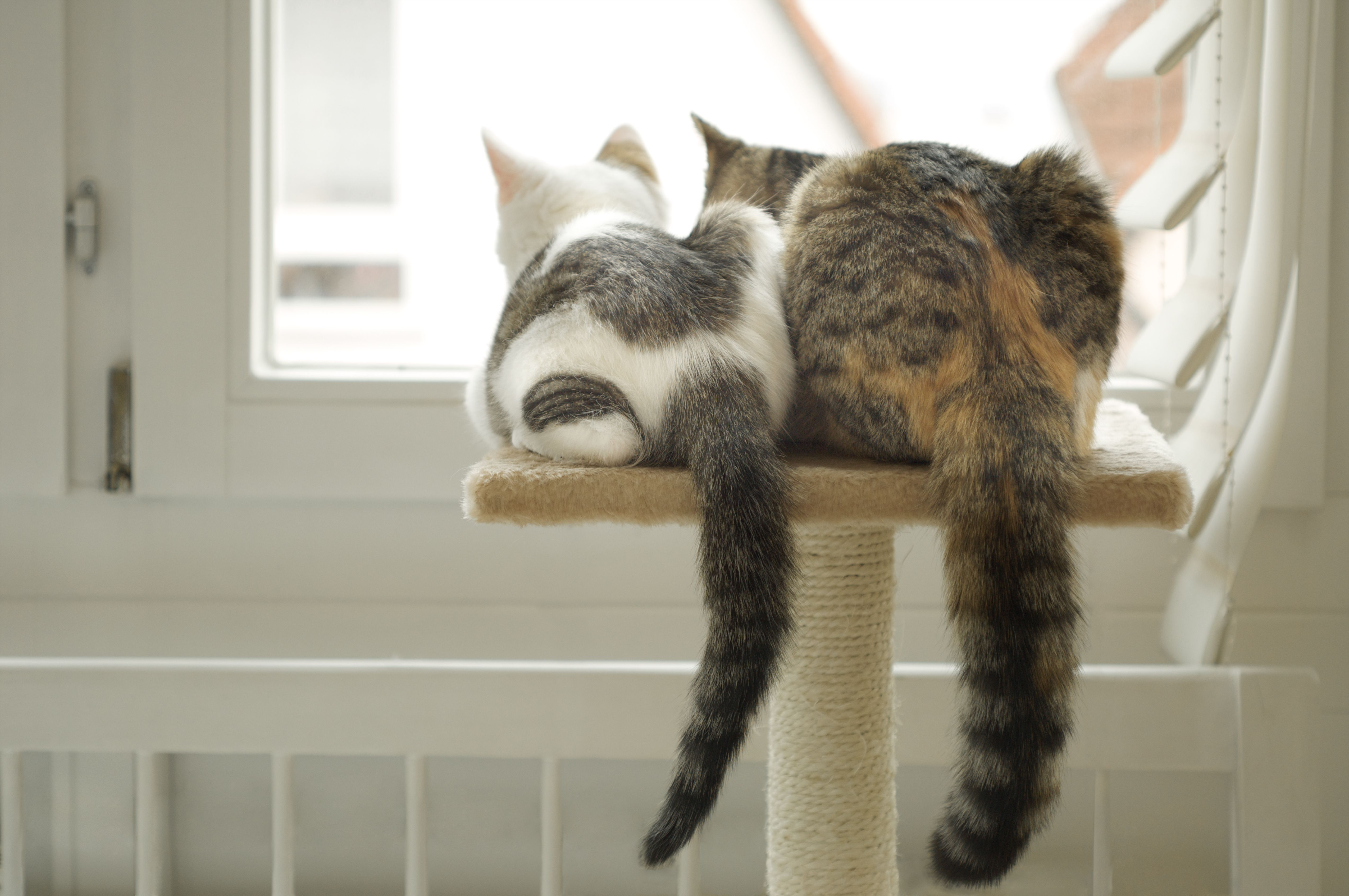 Two cats sitting on cat tree looking out window