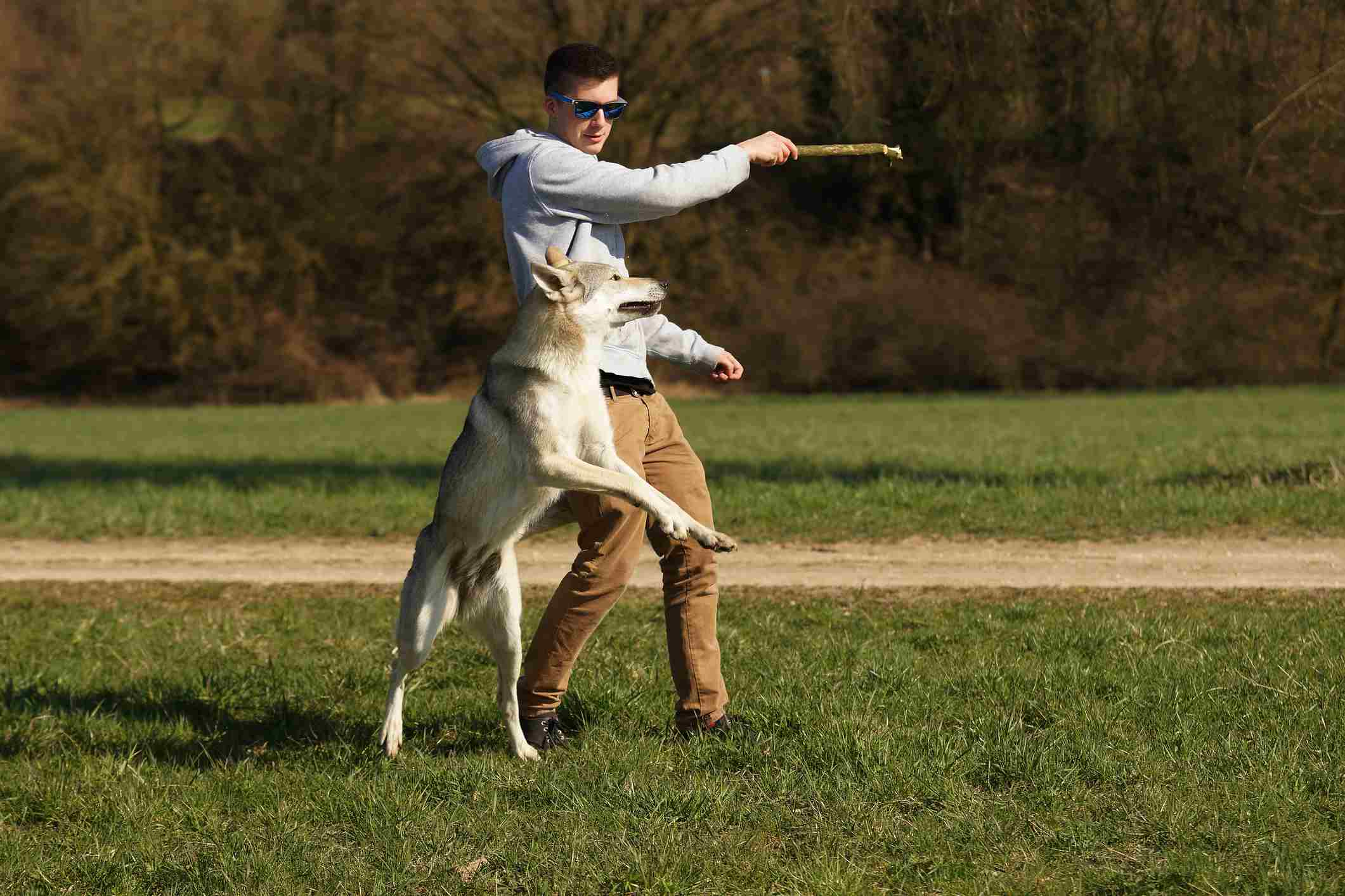 Man playing with wolf dog