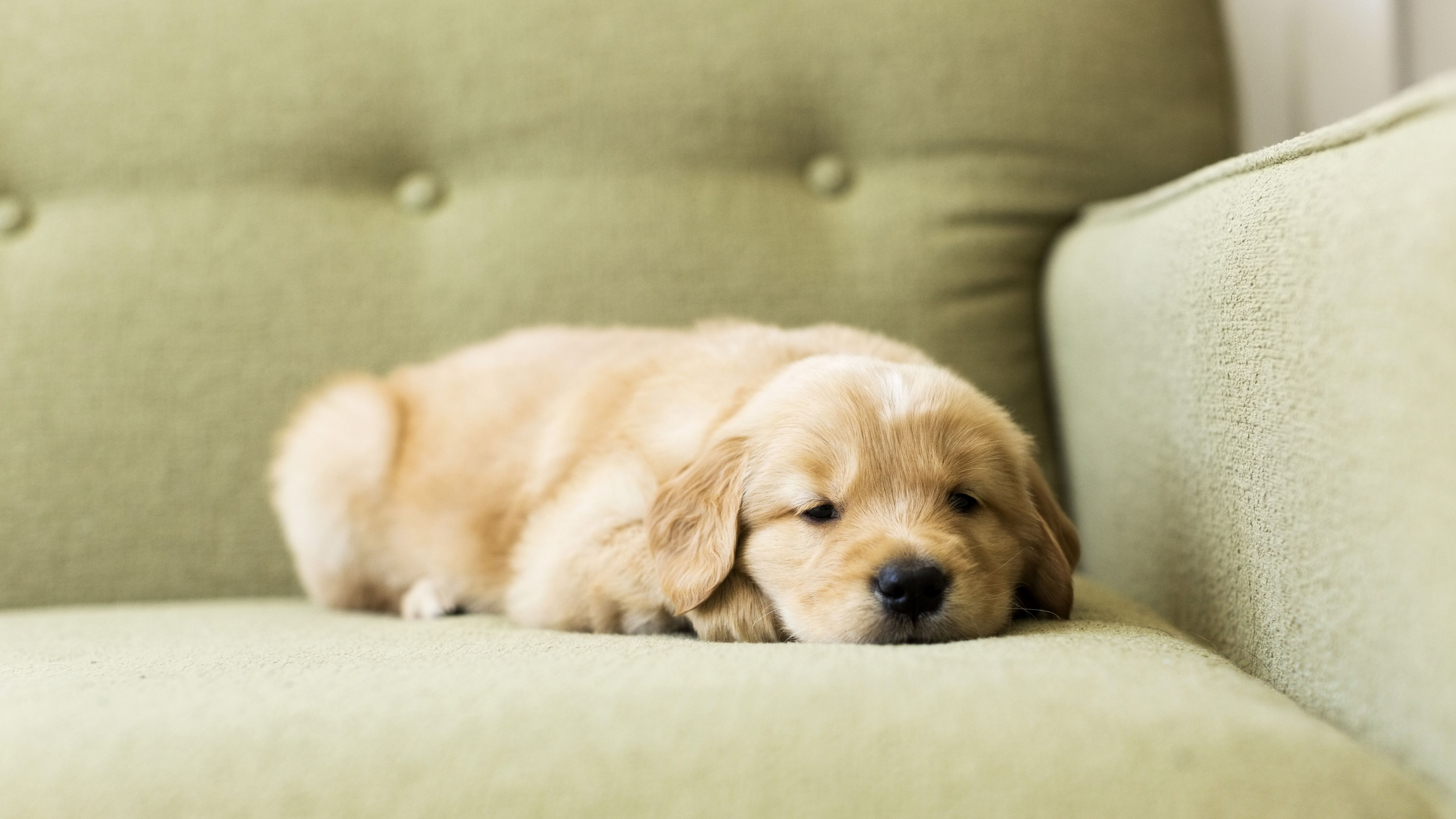 Building A Routine With Your New Puppy