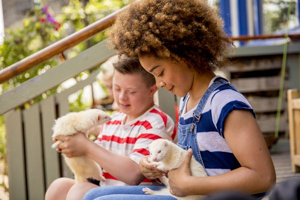 Two kids sitting on a front porch holding white ferrets.