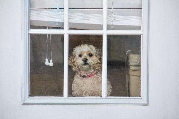 Dog looking out window of a door