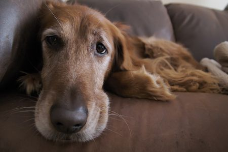 Why Do Senior Dogs Have Accidents?