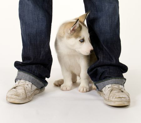 Submissive urination and puppies husky between persons legs m4hsunfo