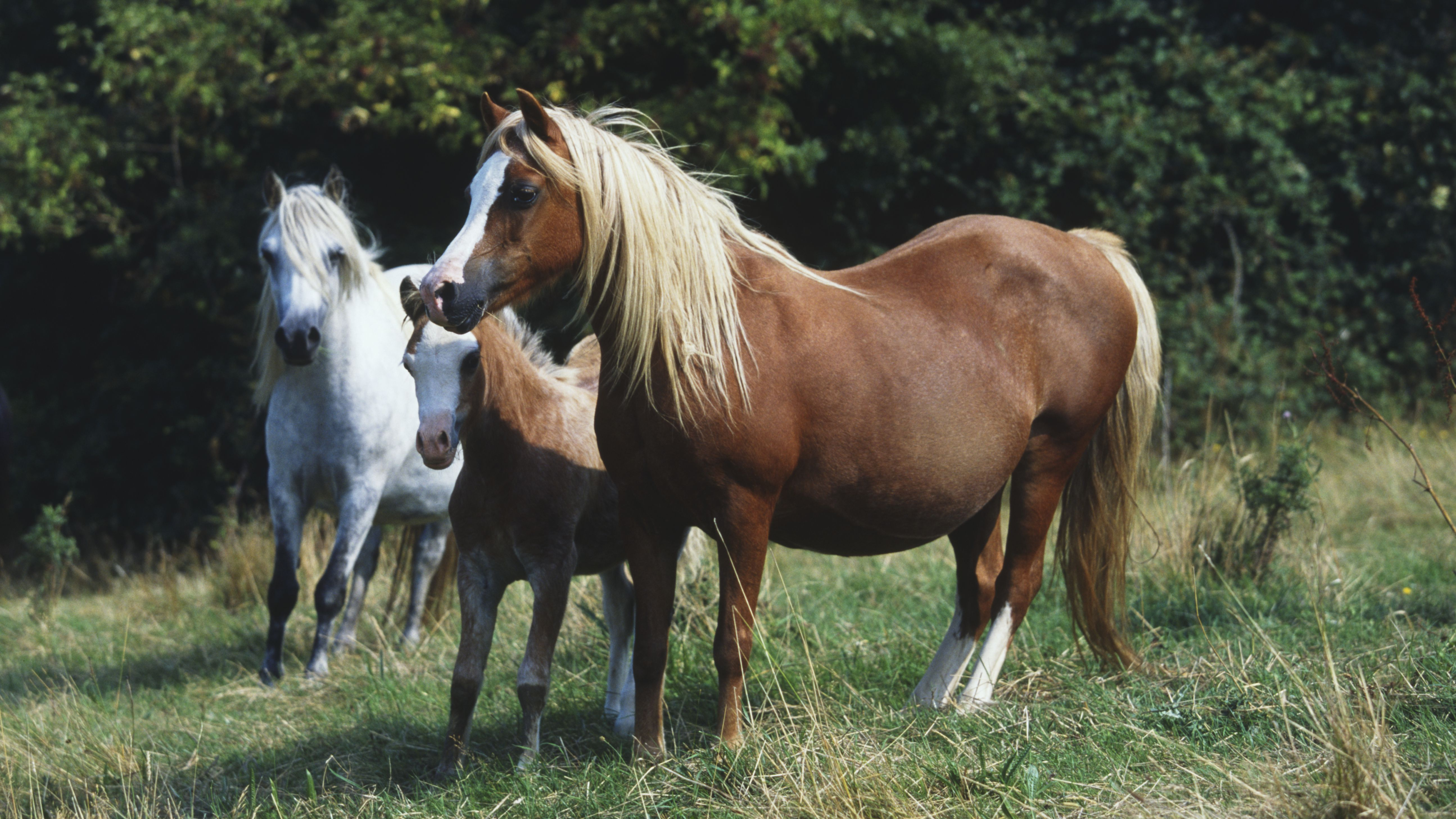 How to Treat Hay Belly in Horses