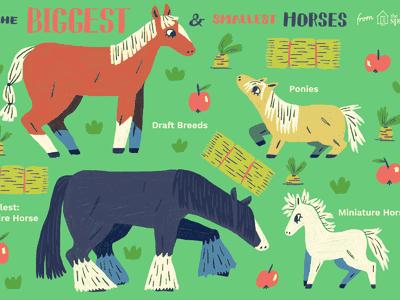 Distinguishing Between Horses and Ponies