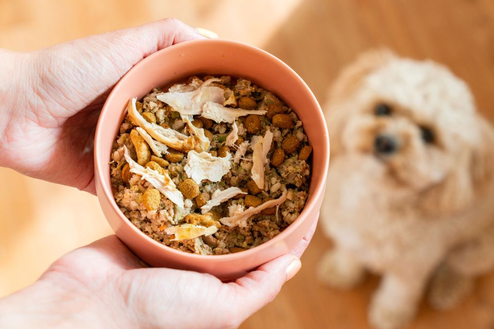 Turkey pieces added to bowl of dog food with dog looking at bowl