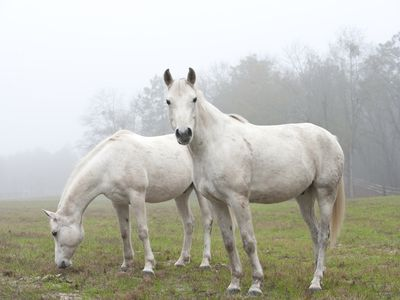 learn what the lifespan of a horse is