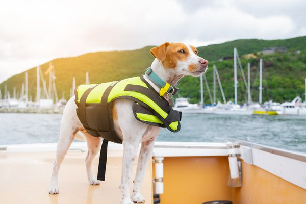 Dog in life jacket standing on boat in front of tree-covered mountain.