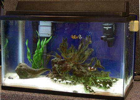 Estimating Costs for a 10-Gallon Mini-Reef Clownfish Tank