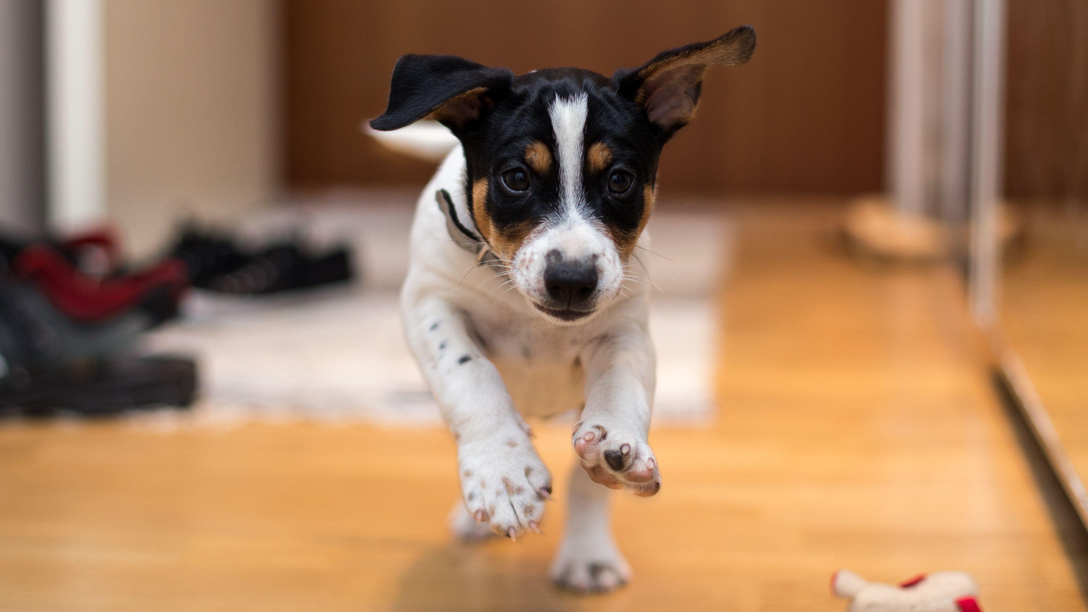"Small puppy essentials: the ""Check"" command"