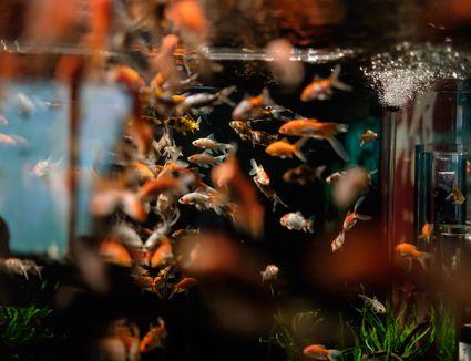 Art Aquarium 2015
