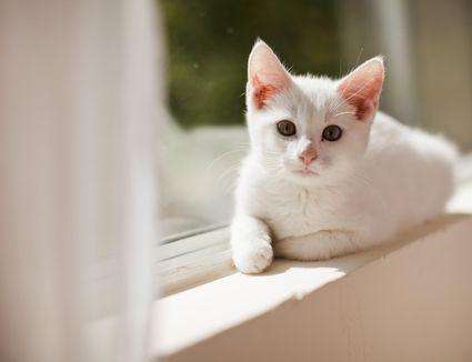 6.5 week old kitten is alert and active