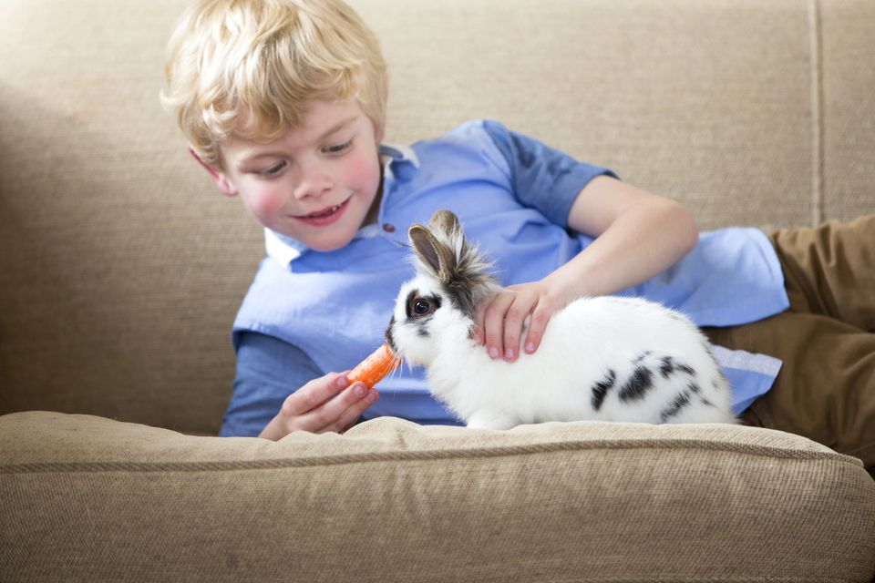 Little boy feeding a pet rabbit