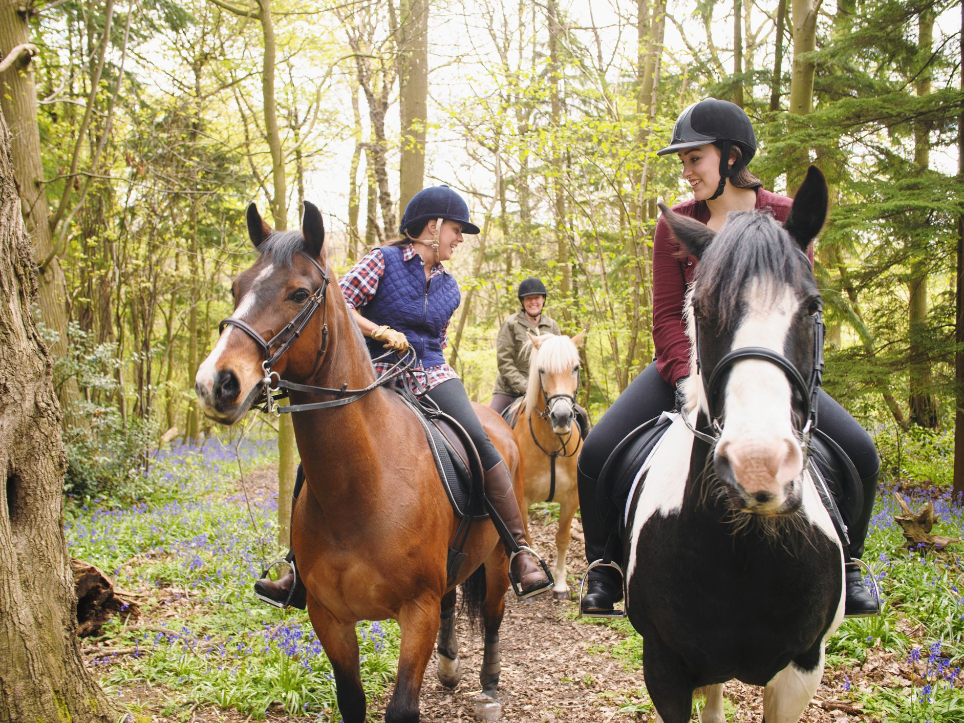Equipment For Safe Horse Riding