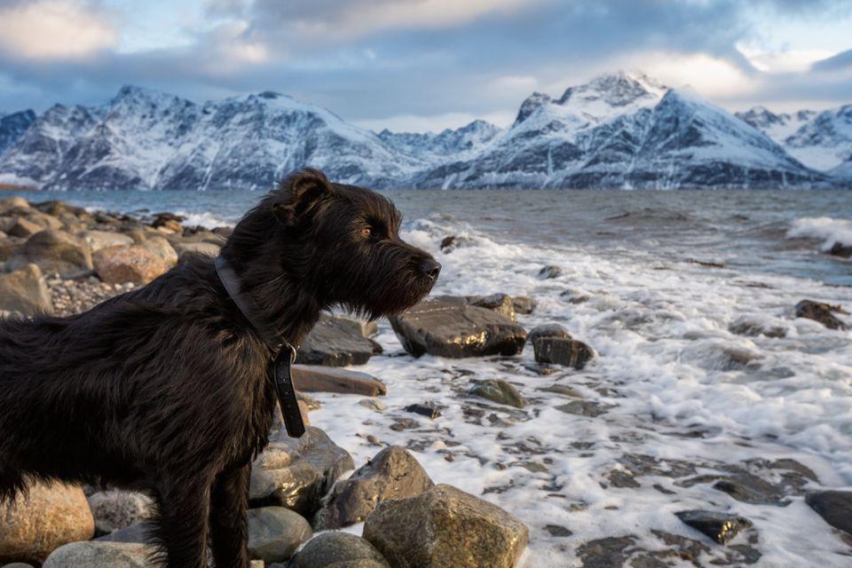 Dog in Norway; Norwegian dog names