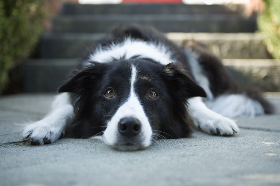 dog laying on pavement