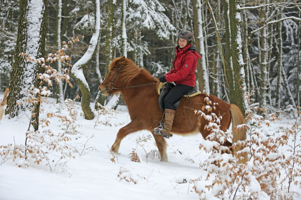 Horsewoman riding an Icelandic horse in the snow, Hagen, North Rhine-Westphalia, Germany, Europe