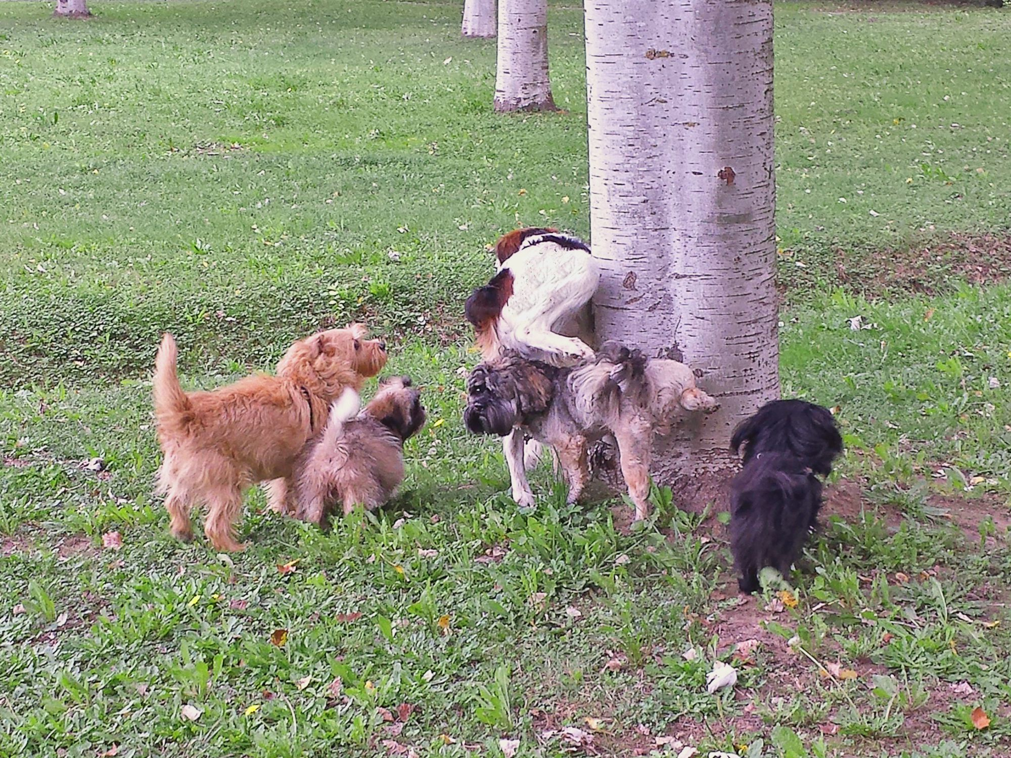 Dogs marking tree