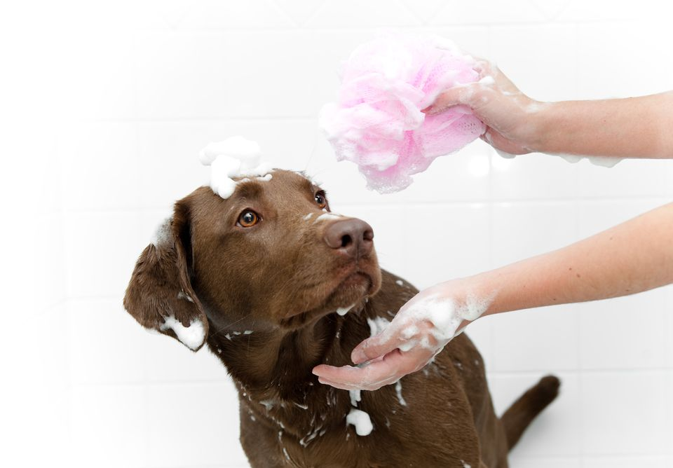 Dog Bath things that annoy dogs