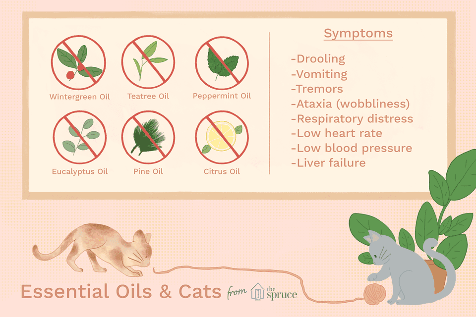 Aromatherapy For Cats And Dogs