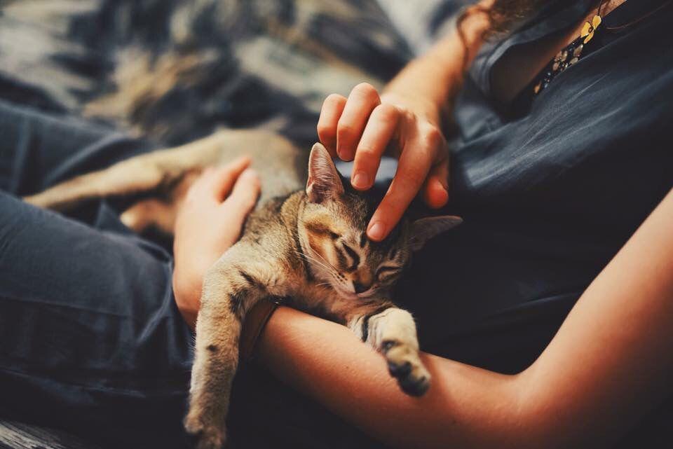 Woman petting her pet kitten