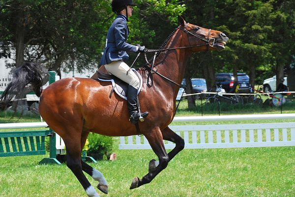 Horse ridden in standing martingale with rider in English gear.