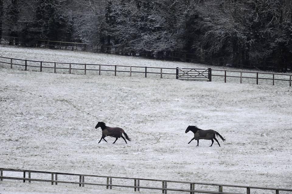 horses galloping across snow