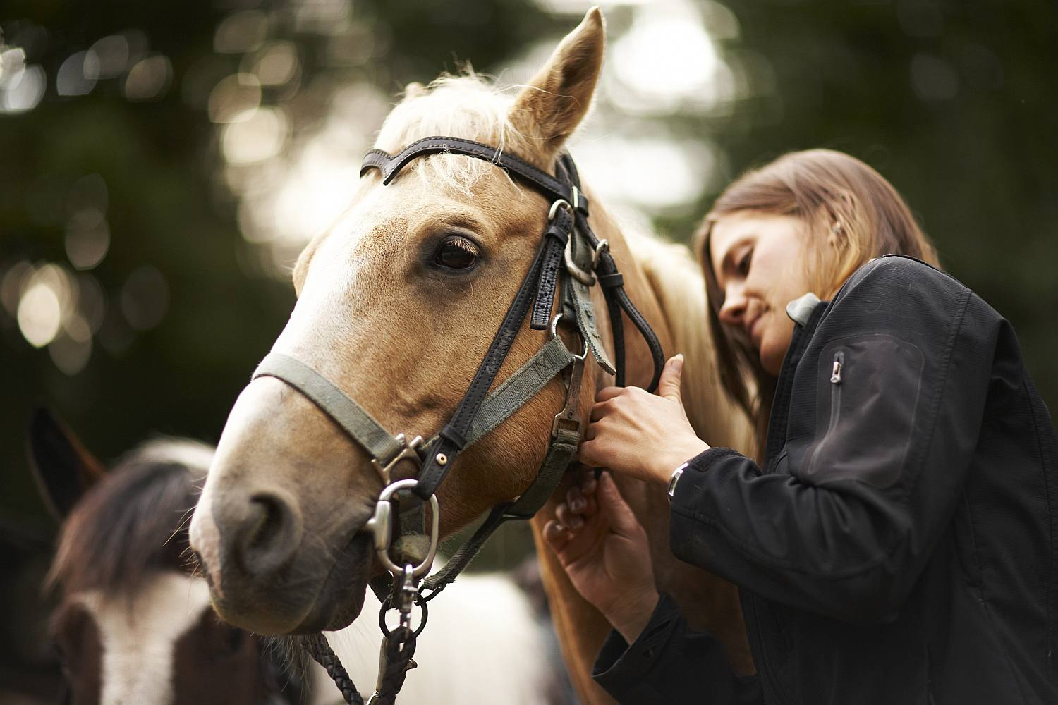 Girl doing up buckle on horse bridle.