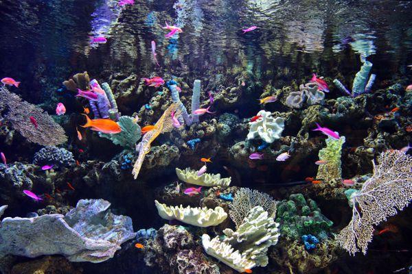 live rock and coral fish aquarium