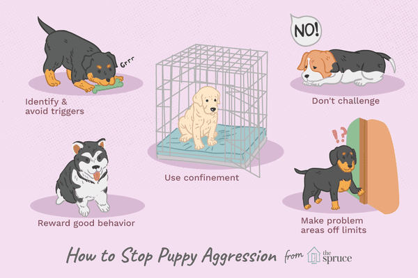 how to stop aggression in puppies