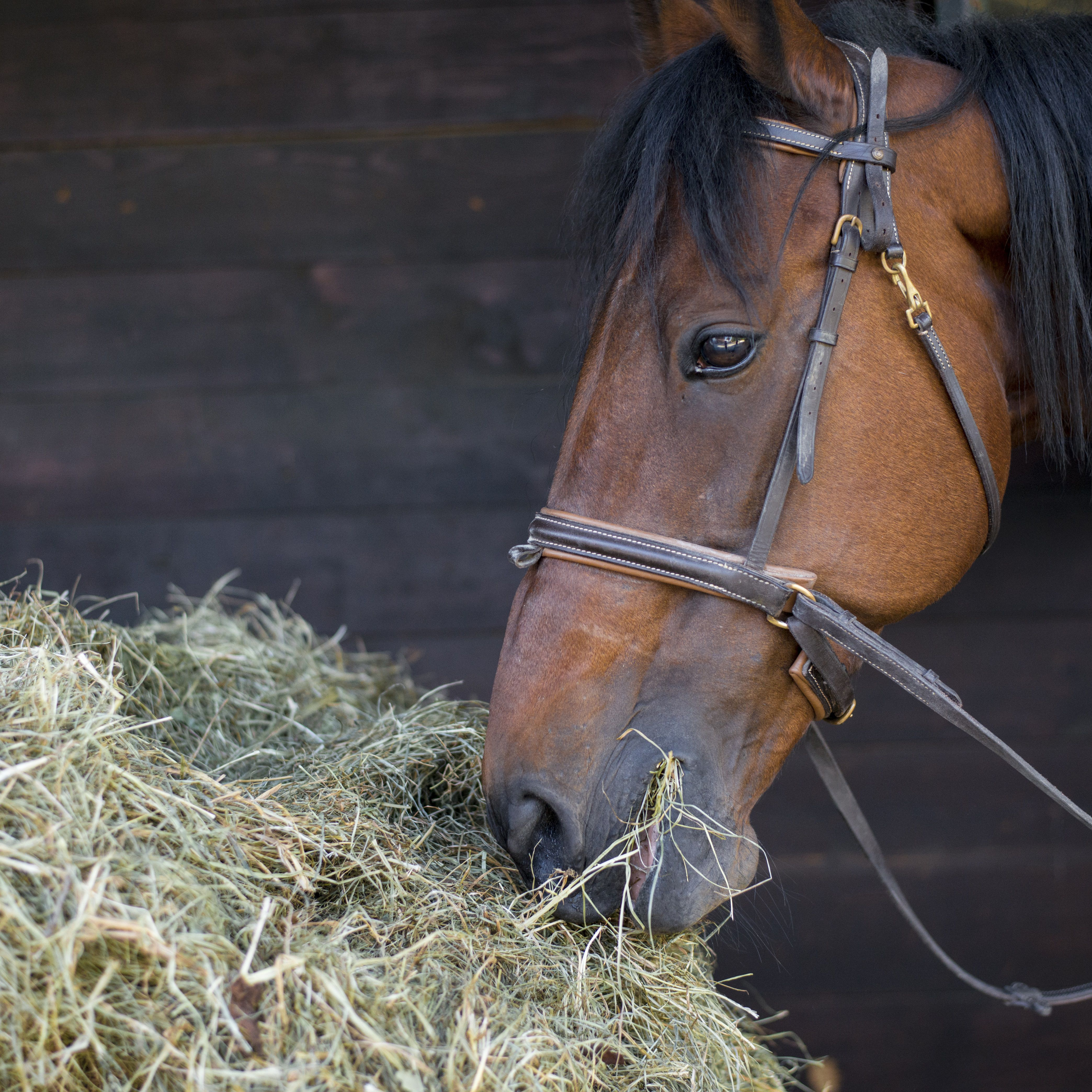 Hay Substitutes for Horses
