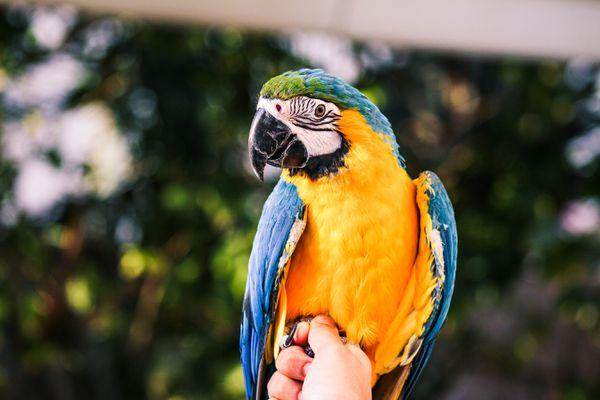 Close-Up Of Hand Holding A Bird