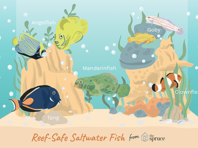 Awesome Beginner Fish For A Saltwater Aquarium